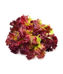 เรดคอรัล (Red Coral Lettuce)