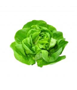 บัตเตอร์เฮด (Butterhead Lettuce)