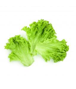 ผักกาดหอม (lettuce)